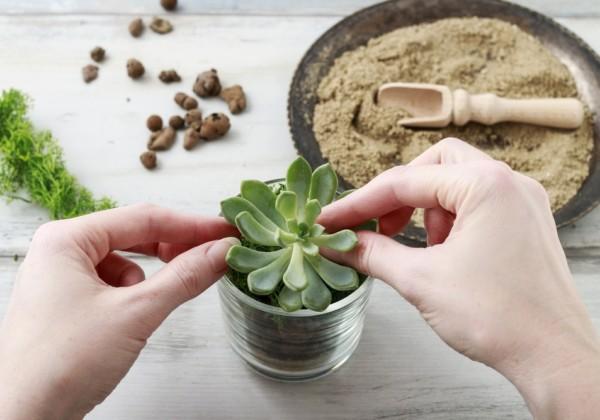 多肉植物の増やし方について・どんどん増える秘密のテクニック!